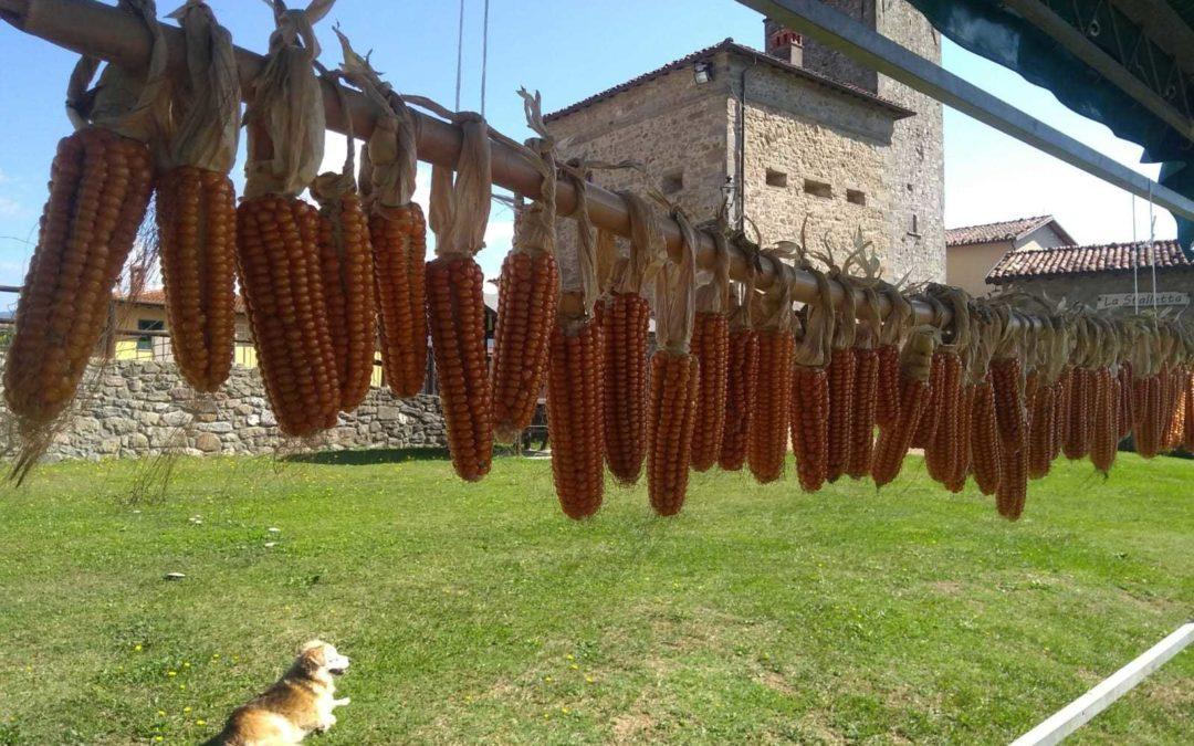 Biodiversity in Tuscany: Strengthening the custodian farmer's role