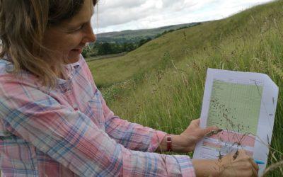 meadow survey sheet